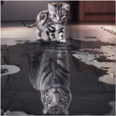 Алмазн. живопись 30*30 ЧАСТИЧНОЕ Кот и Тигр L832
